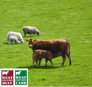 West Country beef and lamb hits supermarket shelves